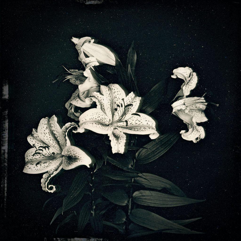 2017-07-12, Lilies, Yamakiya, Fukushima